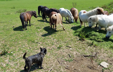 Sherrill Farm Dog & Miniture Ponies
